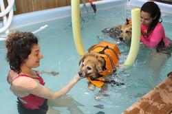 טיפול הידרותרפי לכלב 002