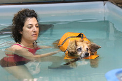 טיפול הידרותרפי לכלב 001