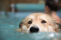 כלב בבריכה