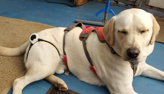טיפול בכלב - לולאת אסיסי - פולס מגנטי