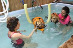 בריכת כלבים טיפולית