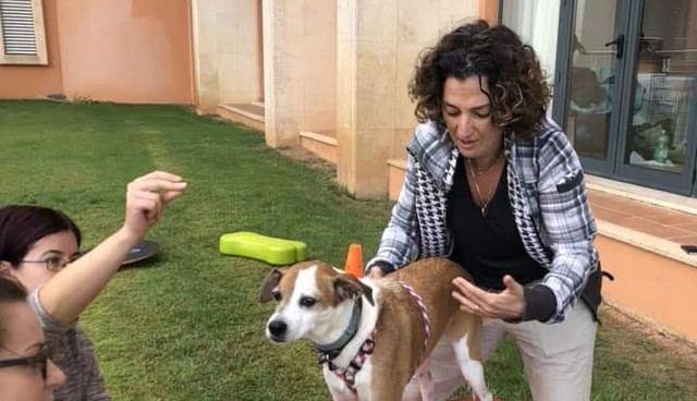 פיזיותרפיסטית לכלבים נועה יוסף אפק