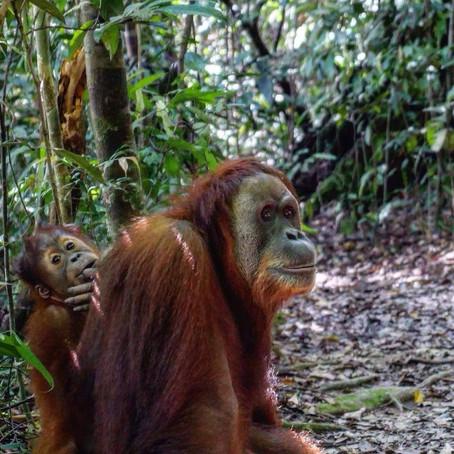 Cerdyn Post Creadigol: Indonesia - Mari Huws