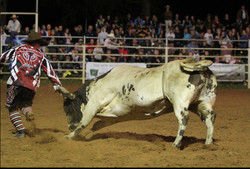 Yass Show, Rodeo, 2014