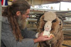 Showing Sheep, Yass Show