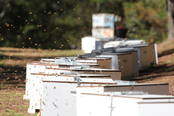Beehives, Oberon State Forest