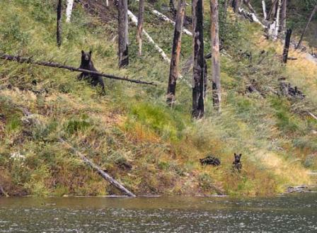 Осторожно, медведи