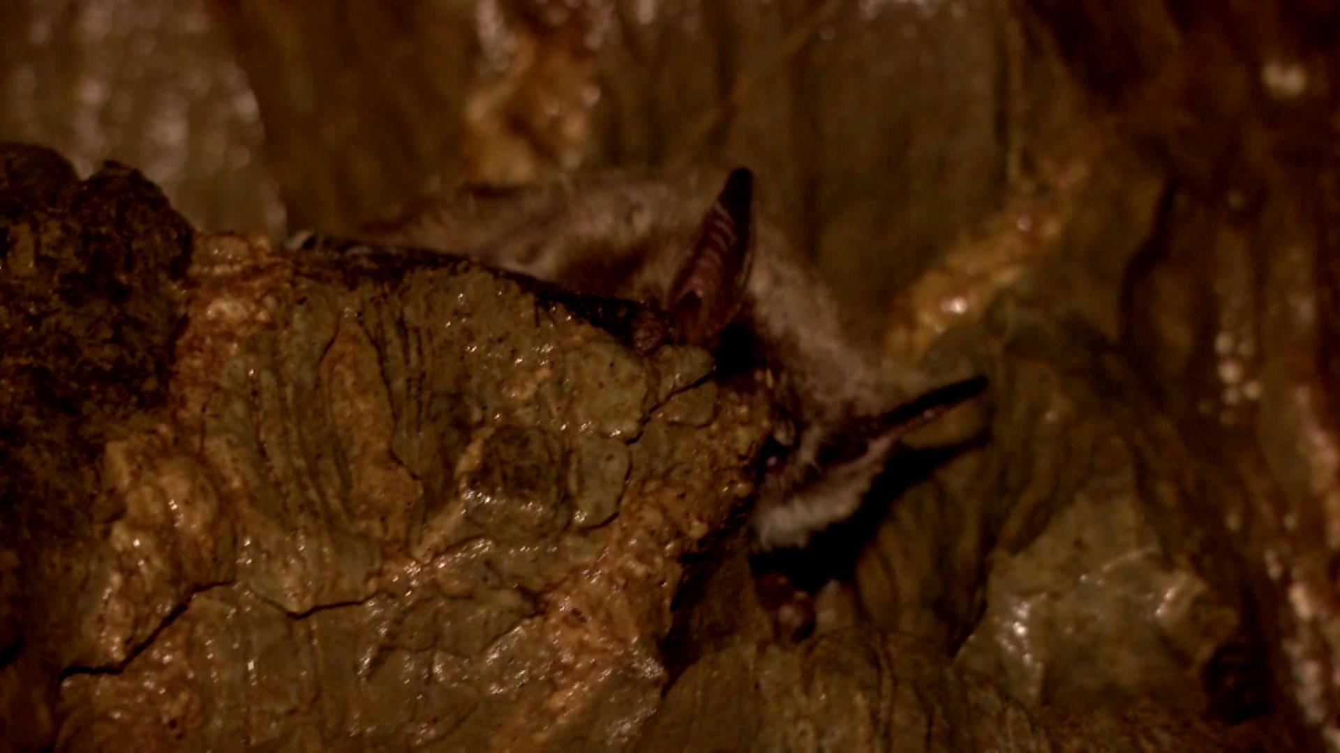Зимой мыши впадают в спячку