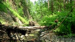 Устье реки