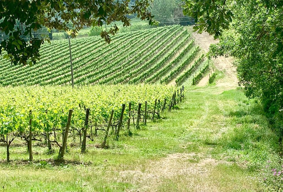 Montalcino e il Suo vino