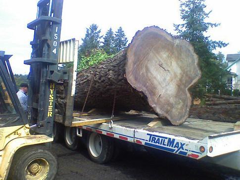 Blackwalnut unloaded