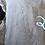 """Thumbnail: Maple 524 (1.875""""x19-36""""x111"""")"""