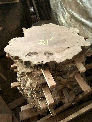 """Maple Burl rounds / cookies (2.25""""x20-24"""")- air drying"""