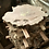 """Thumbnail: Maple Burl rounds / cookies (2.25""""x20-24"""")- air drying"""