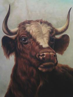 Head Of a Bull (Rosa Bonheur)