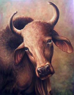 Head Of an Ox