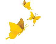 나비.png
