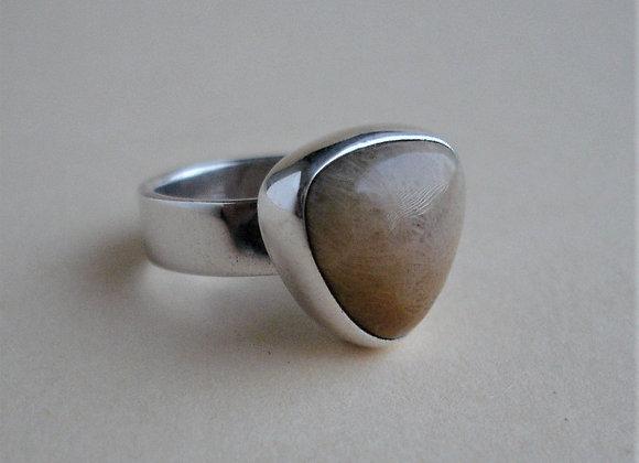 ring versteend koraal, driehoek