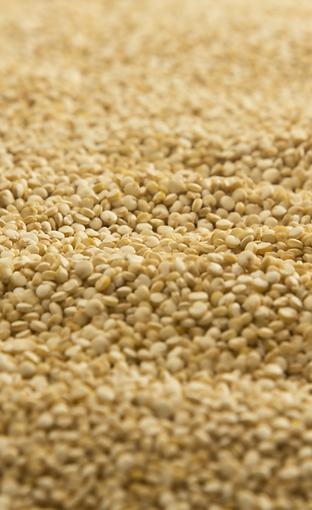 Quinoa Blanca en Grano