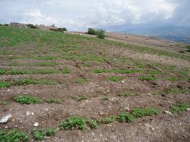 Pos emergencia de la Quinoa