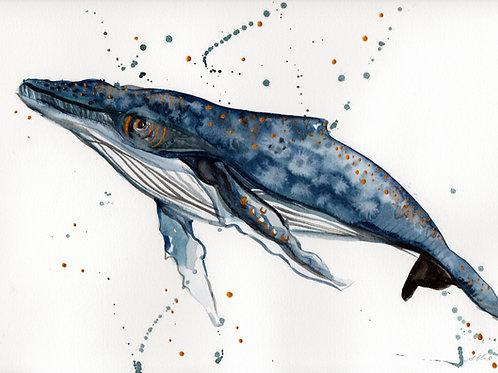 Watercolour Humpback Whale