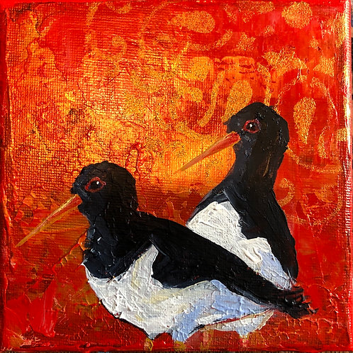 Oyster catcher canvas