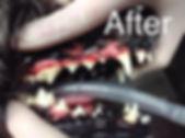 dentalafter.JPG