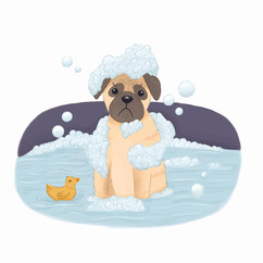 Pages 6 - Fair-Weather Pug.jpg