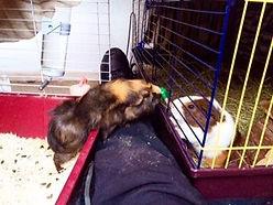 Kompisarna håller sig sällskap under ledigheten på djurpensionat