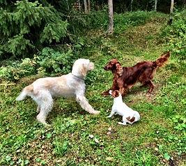 På hunddagis tränar man ofta på hundspråket