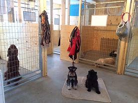 Alla hundrum ligger runt arbetsrummet på Sötnosars Djurpensionat och hunddagis