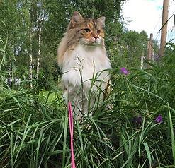 Kattpromenad på Kattpensionat Sundsvall