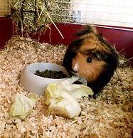 Vi bjuder på färska grönsaker under tiden på smådjurspensionat