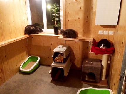 6kvm stor kattsvit kattpensionat Sötnosar