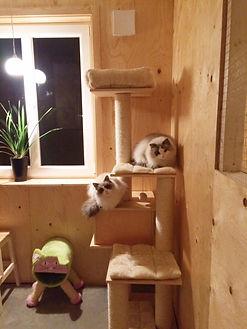 Kattsvit kattpensionat sundsvall