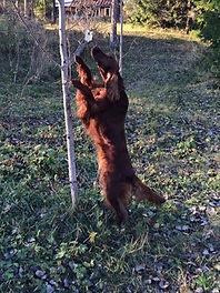 Aktivering på hunddagis Sötnosar på Alnö