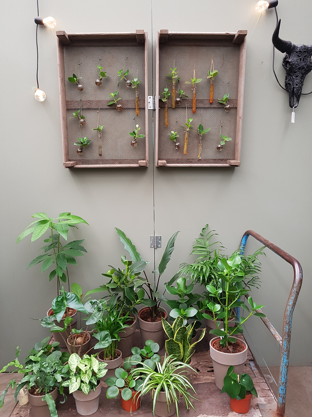 Concept Store VDE Plant - C-Style Concepts