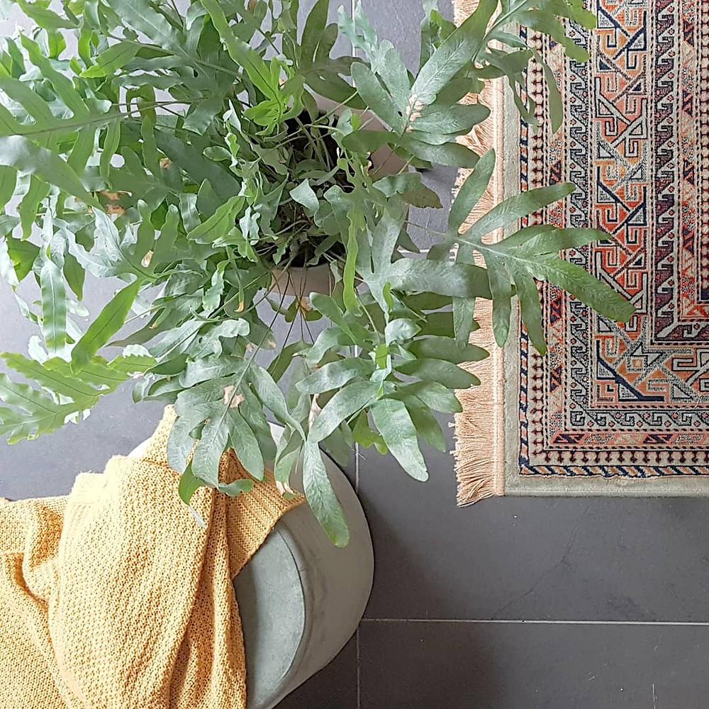Kamerplanten - C-Style Concepts - interieuradvies