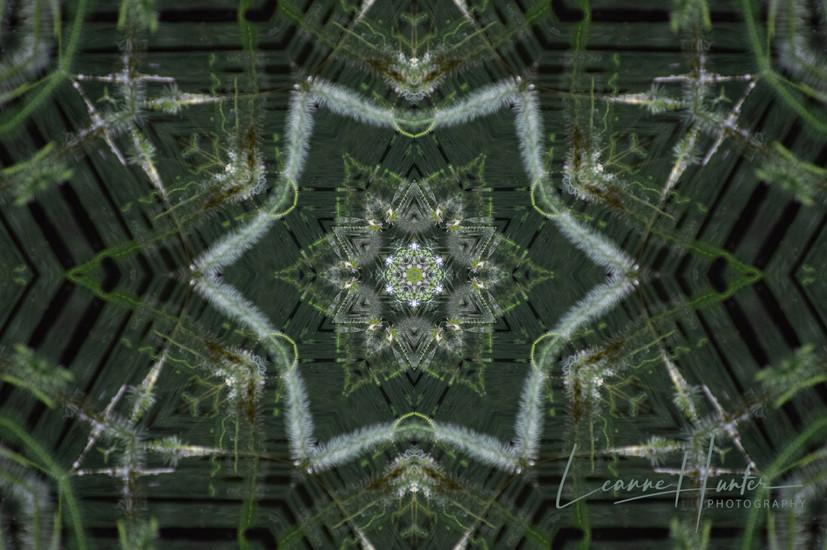 Mallard Abstract