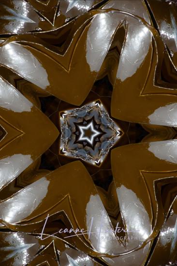 Kelp Abstract 1