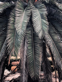 another palm tree.jpg