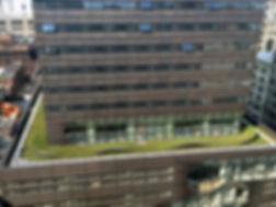 new_school_green_roof_01-850x637.jpg