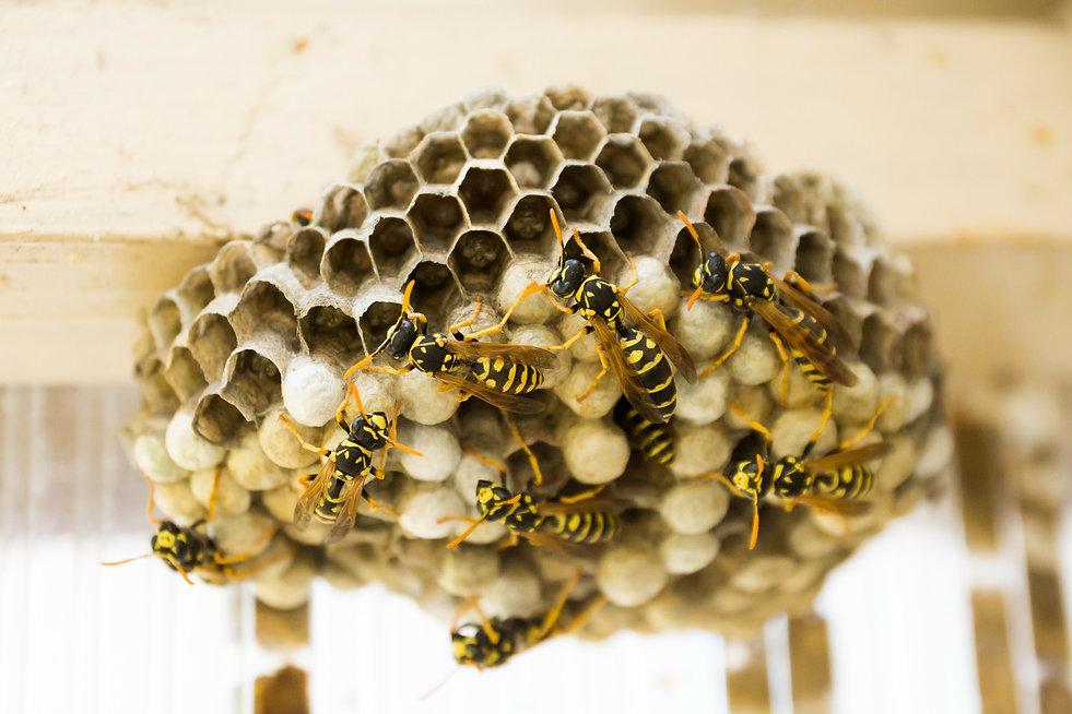 the-hive-335984_1920.jpg