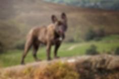 pet photography ramshaw rocks.jpg