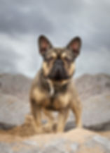 dog photography after editing.jpg