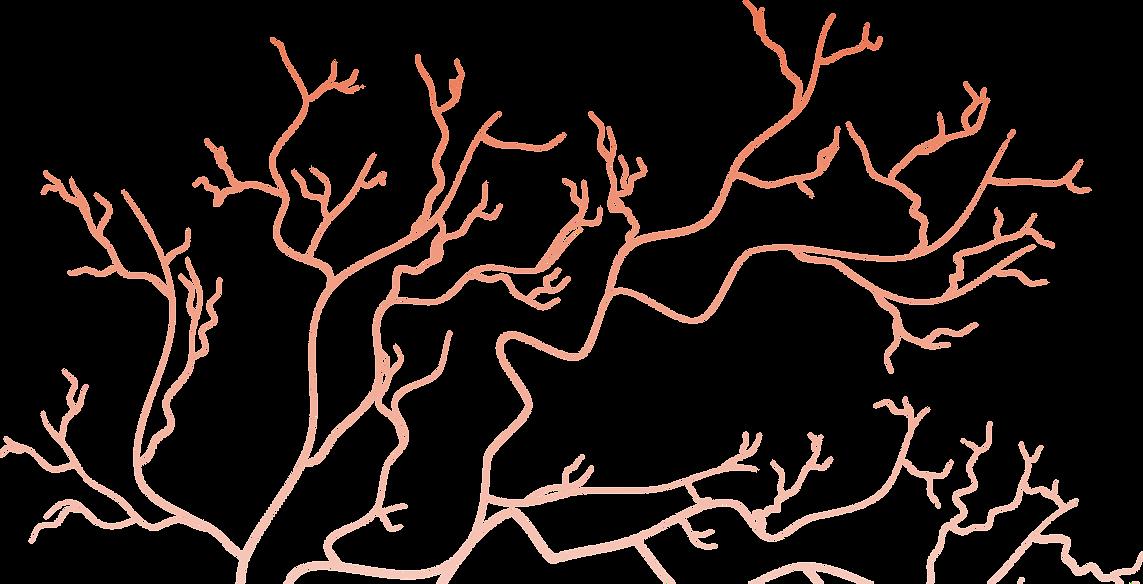 Eye veins.png