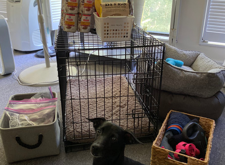 Organizing For Your Dog (and You)