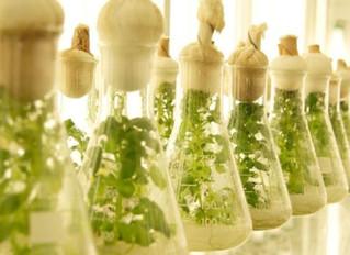 ¿Sabes qué es la agricultura celular?