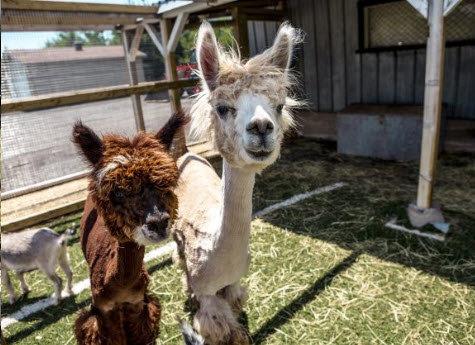 animaux de ferme chez autocueillette be