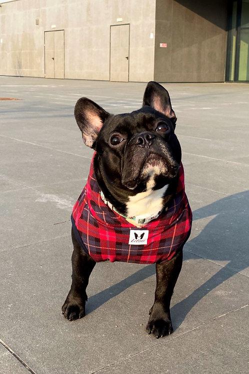 Felpa Bulldog - SweetSheep Check All Star
